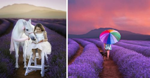 Lavender Fields and Gorgeous Fur Babies and Friends in One Perfect Imagery