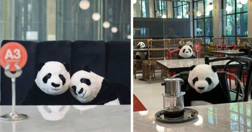 Charming Way to Respect Distance Measures – Panda Plush Dolls