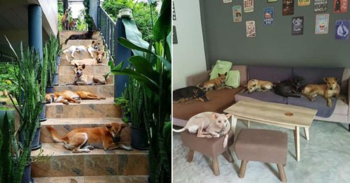 After Beloved Dog Died, Couple Adopted 15 Strays; Today They're Protecting Entire Dog Population on the Koh Kood Island