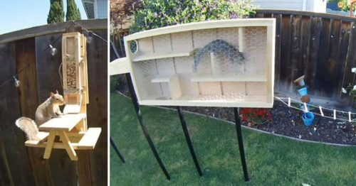 Ninja Warrior Squirrel Edition – Built by Former NASA Engineer