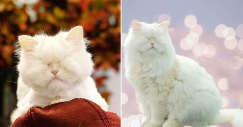 Moet the Blind Cat – Your Daily Dose of Cuteness and Fluffiness