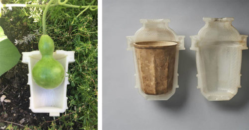 """""""Cups for the Future"""" – Gourd Drinking Vessels – Compostable, Without Waste"""