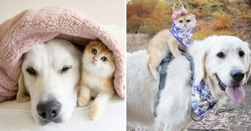 The Sweetest Duo – Samson & Cleo Win the Internet Today