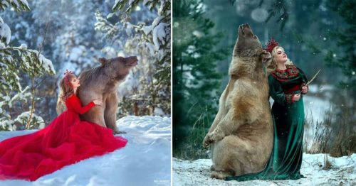 This Russian Brown Bear is a Professional Model and a Superstar