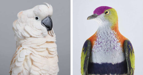 Human-Like Personalities within Birds in Colorful Portraits by Leila Jeffreys