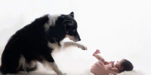 How to Introduce Your Dog to a Newborn