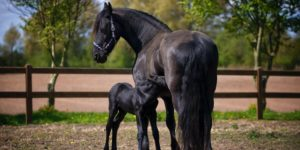 Fun Facts About Horses You Probably Didn't Know